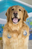 YAKO (Tc photography.Perú) Tags: blue boy dog water goldenretriever retriever ballons yako carnivals yaku tcphotography