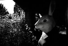 LC-A + fake Kodak BW 400 CN (littlekoala82) Tags: blackandwhite rabbit abandoned blancoynegro mask conejo máscara abandonado