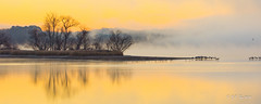DSC09056 Somewhere We Can Have Peace () Tags: life morning light wild lake tree fog landscape island tn crane sony land alpha refuge hiwassee 70400mm 70400 a580 sal70400g sal70400g2 vision:sunset=0849 vision:sky=0948