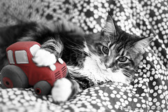 the cat and the tractor (Adriano Perla) Tags: red italy cat photoshop canon perla ruby10 ruby5 potd:country=it