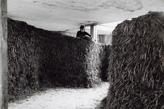 Via Cava 015 (Alexandra Engelfriet) Tags: netherlands amsterdam straw clay adobe afrika loam pakhuis