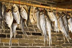 conghua-8700-ps-w (pw-pix) Tags: china old fish village bricks bamboo guangdong dried drying driedfish oldvillage southernchina conghua dryingfish ancientvillage xuanxing xuanxingvillage