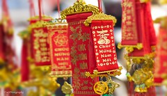 IMG_3924 copy (Nguyn Quc Tuyn) Tags: new year lunar mi nm lc ling