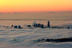 DSC02473p (coyote1086) Tags: fog vancouver sunrise cypress