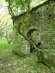 P1000347x (gzammarchi) Tags: casa italia natura porta pietra montagna arco paesaggio bosco rudere camminata itinerario casaglia inalto giogo firenzuolafi