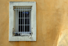 le chat blanc (noelyves_leopold) Tags: virela virela2 virela3 virela4 virela5 virela6 virela7 virela8 virela9 virela10