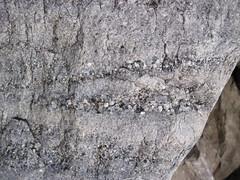 Pebbly quartzite (Baraboo Quartzite, upper Paleoproterozoic, ~1.7 Ga; Tumbled Rocks Trail, Devil's Lake State Park, Wisconsin, USA) (James St. John) Tags: park lake rocks state south devils pebbles pebble trail ranges range quartzite baraboo pebbly precambrian tumbled paleoproterozoic proterozoic