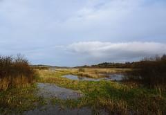 Glades (Bricheno) Tags: loch aird airdmeadowloch lochwinnoch bricheno scotland escocia schottland cosse scozia esccia szkocja scoia
