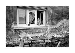 Dolls (Jan Dobrovsky) Tags: countrylife countryside document dolls gypsies krasnalipa leicam monochrome outdoor people summicrcon28mm village