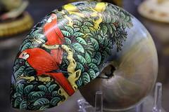 Painted Nautilus (Benn Gunn Baker) Tags: benn gunn baker canon 550d t1i dorset dorchester museum painted nautilus art parrots birds