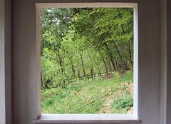 quadrofinestra (miriam.lonardi) Tags: fujifilm fujifilmxt10 fuji fujinon fujinonxc1650mm finestra quadro alberi natura verde autunno parco parcogiardinosigurt sigurt valeggiosulmincio verona italia muro