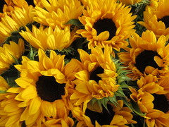 Friday, 21st Market sunflowers IMG_8739 (tomylees) Tags: chelmsford essex october 2016 21st friday sunflowers explore
