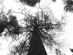 Old tentacle horror tree (Kirppu_81) Tags: blackandwhite mustavalko epl3 tampere lokakuu