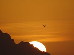 L'ultimo volo (RoBeRtO!!!) Tags: rdpic orange sky sunset light sun seagull flight bird cielo arancione luce tramonto sole gabbiano volo uccello sonyhx400v