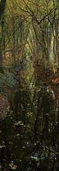 (wistine) Tags: autumn herbst tree trees baum bume