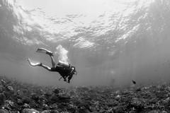 Boss (Randi Ang) Tags: tulamben bali indonesia underwater scuba diving dive diver randi ang canon eos 6d fisheye 15mm