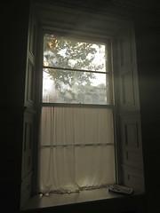 Sunlight through a dirty window in Belfast, Ireland UK (albatz) Tags: window sunlight curtain dirtywindow belfast ireland uk