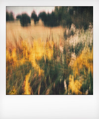 Fall landscape. (jeanne.marie.) Tags: trees landscape iphone5s iphoneography intentionalcameramotion instant intentionalcameramovement icm blur goldenrod wildflowers autumn fall