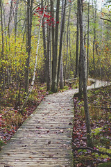 Boardwalk on the Bog (Christie Purchase) Tags: boardwalk plank woods forest bog trees red lines winding curve nature pathway outdoors canon 50mm