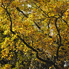 Automn abbey (gwelr) Tags: tree trees gwelr 2016 darktable c11 nature outdoor