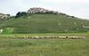 castelluccio di norcia (vencjon) Tags: castelluccio di norcia fioritura
