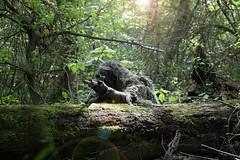 ghillie sniper ares msr (TheSwampSniper) Tags: airsoft sniper swamp bolt action ballahack marksman replica intervention elite force g28 novritsch owner field ghillie suit hood best dmr high powered spring aeg