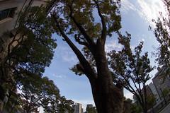 The Sky over Nakanoshima, Osaka (nak.viognier) Tags: sky nakanoshima osaka 空 中之島 olympusepl3 lumixgfisheye8mmf35
