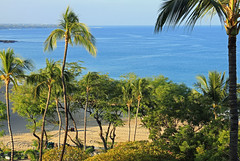Hapuna Beach Prince Resort (mariewise) Tags: hawaii hapuna beach resort bigisland princeresorts travel vacation ocean paradise palm tree palmtree coconut cocoanut