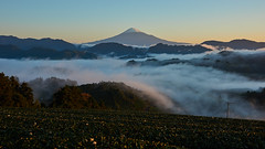 Mt.Fuji and sea of clouds (peaceful-jp-scenery (busy)) Tags: mtfuji shimizu mist fog landscape mountain worldheritage        sony 99 a99 slta99v amount sal2470z variosonnart2470mmf28za carlzeiss  seaofclouds