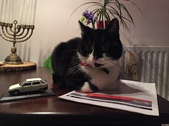 Ayo is watching my new Yugo/Zastava stuff (peterolthof) Tags: peterolthof ayo poes cat