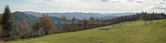 Paturage (hervv30140) Tags: france languedoc lozre cvennes mount landscape sheep meadow grassland pasture herd mutton green nature