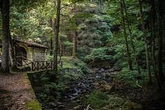 In the woods, Camaldoli (Tuscany) (f.bigslave) Tags: europe italia italy toscana tuscany arezzo camaldoli monastery monks nature woods rivers streams wildlife summer