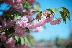 last day of spring (ho_hokus) Tags: film analog 35mm 35mmfilm analogue ektar nikkor50mmf14 35mmcamera nikonfm2n 2013 nikonfilmcamera kodakektar100 filmphotographypodcast