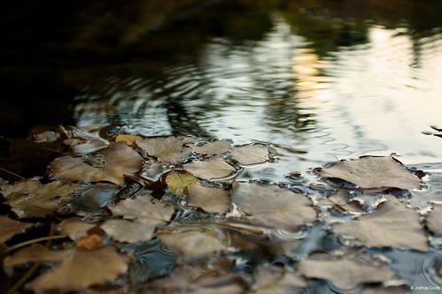 Photo - Still water on South Boulder Creek, near the South Mesa Trailhead.