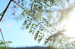 (lincoln koga) Tags: sky folhas luz sol nature leaves azul 50mm nikon dof c cotidiano cu observe lugares lincoln urbano beleza luzes abstrato tempo galhos passeio momentos olhares criao f12 cidades foco simplicidade desfoque observando koga manchas encontros aprendizado explorando chamado admirao suavidade limpo contemplao ebf 2013 pedaosdemim expressando aguardo euvejo fragmentao lincolnkoga 50tinha novosrumos d7000 euencontro meutempo lincolnseijikoga novoslugares novosolhares meumomento acampamentomoriah refgiosecreto silncioreflexivo tempodesilncio meusencontros voudescobrindo vouexplorando ofertadeamor teentrego nossoviver tudoemmim aguardoporvoc