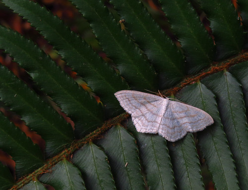 205/365 — Moth on fern