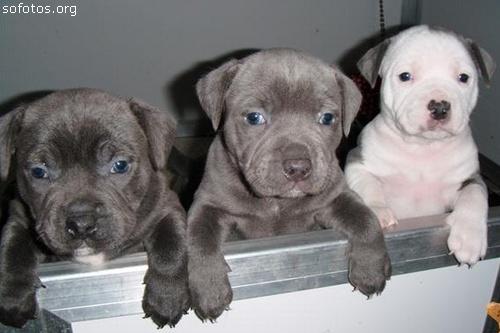 Filhotes de cachorros 52