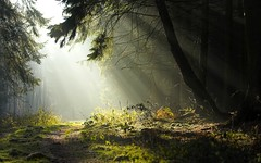 Nature-Forest-Landscape-Pictures-Wallpaper (vinod_pednekar) Tags:
