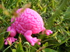brainfrog (nuo2x2) Tags: pink color grass flesh toy 1 jumping outdoor magenta brain frog figure series garcia emilio toy2r cymk brainfrog nuo2x2