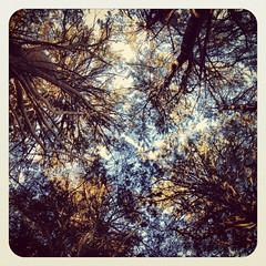 Four Corners (2812 photography) Tags: california color photography berkeley  places squareformat utata bayarea pete eastbay process treeline earlybird 2812 thursdaywalk rosos instagram utata:project=tw391