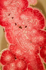 National Museum of Natural History (SebastienToulouse) Tags: usa history museum washington natural pierre musee papillon national mineral insecte diamant étatsunis opnet opnetwork districtdecolumbia