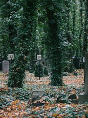30.10.2013_Jewish_cemetery_Prague-72.jpg (Churechawa) Tags: light shadow color tree composition forest artistic magic mysterious fujifilm tale mystic compact eggleston jeseniky danielpolacek fujifilmf70exr