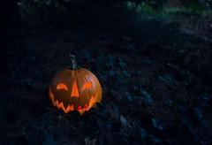 303: jack of the woods (Jen MacNeill) Tags: halloween pumpkin jack woods october jackolantern spooky 31st jol jennifermacneilltraylor jmacneilltraylor jennifermacneill jennifermacneillphotography