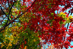 Fall Colors 2013 (ShootsNikon) Tags: life autumn homes fall halloween nature landscapes newjersey fallcolors nj parks churches autumnleaves autumncolors trainstation greens oranges yellows reds smalltown rutherford naturesbeauty churchsteeples nikkorglass judybrown nikond3 colorfulfoliage judymalley