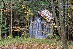 Staipa....   IMG_5397 (gianni.giacometti) Tags: italia autunno carnia bosco friuli ravascletto comeglians staipa