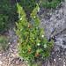 Trees_of_Loop_360_2013_084