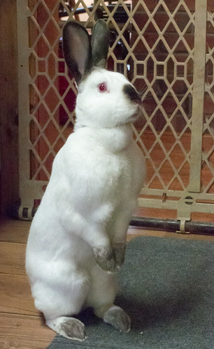 Willow the Bunny