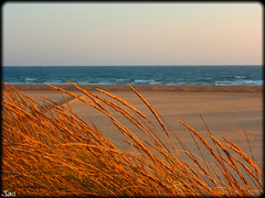 Punta Umbra (Huelva) (sky_hlv) Tags: espaa beach andaluca spain huelva playa atlanticocean pinares costadelaluz puntaumbra oceanoatlntico