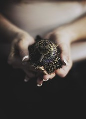 a kind hand to rest upon. (Nicole Belke) Tags: wild cold bird death frozen hands peace sad breath creature fragile hold humble holdme