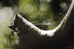 Dreamy Web (LRFarias) Tags: spider ef14x ef70200f4lis canon6d